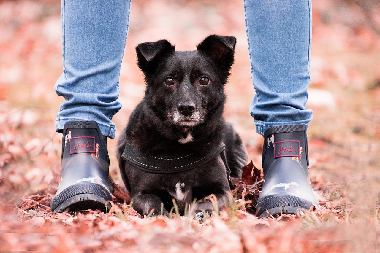 autumn, dog, animal