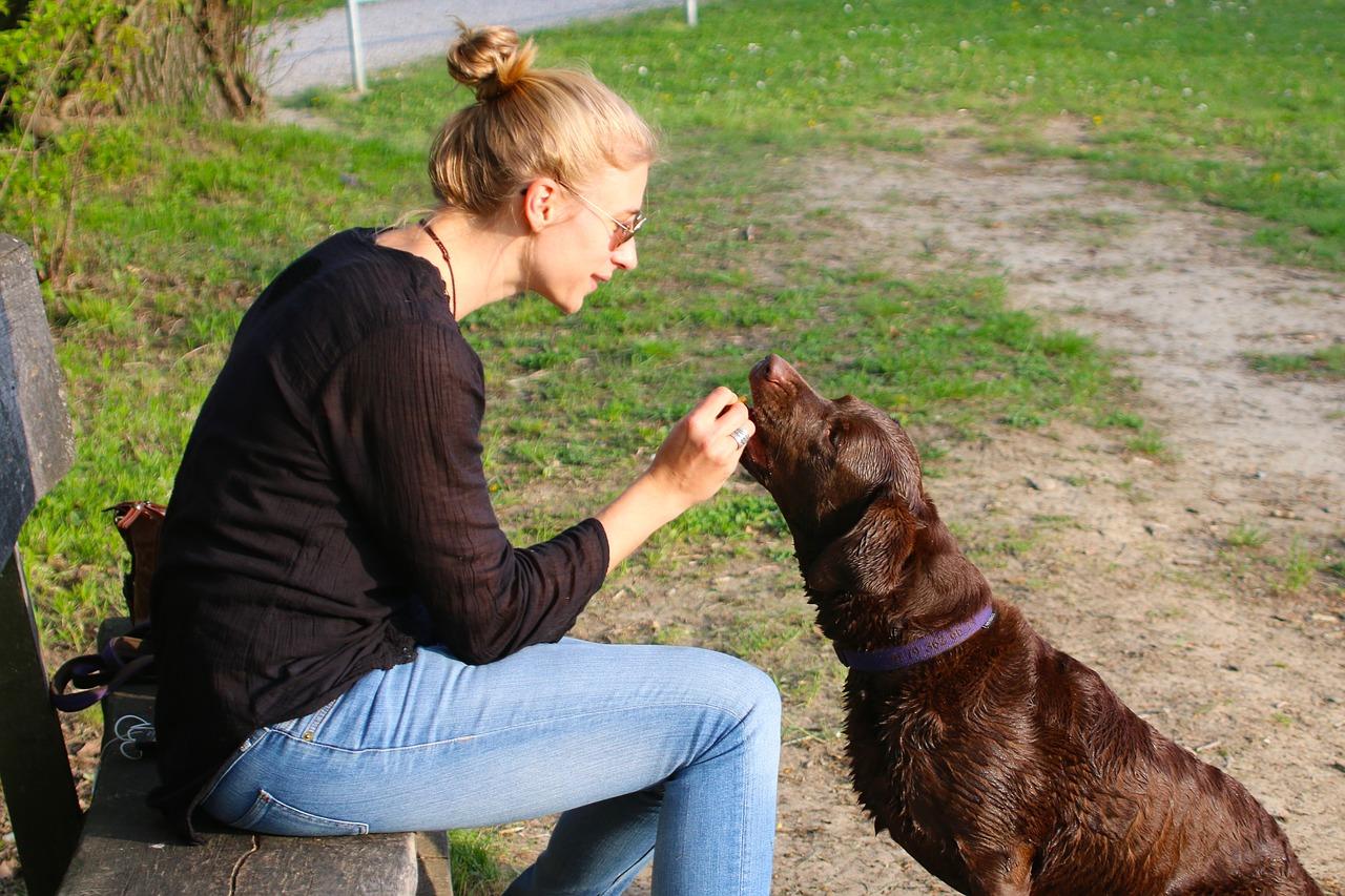 human, animal, dog