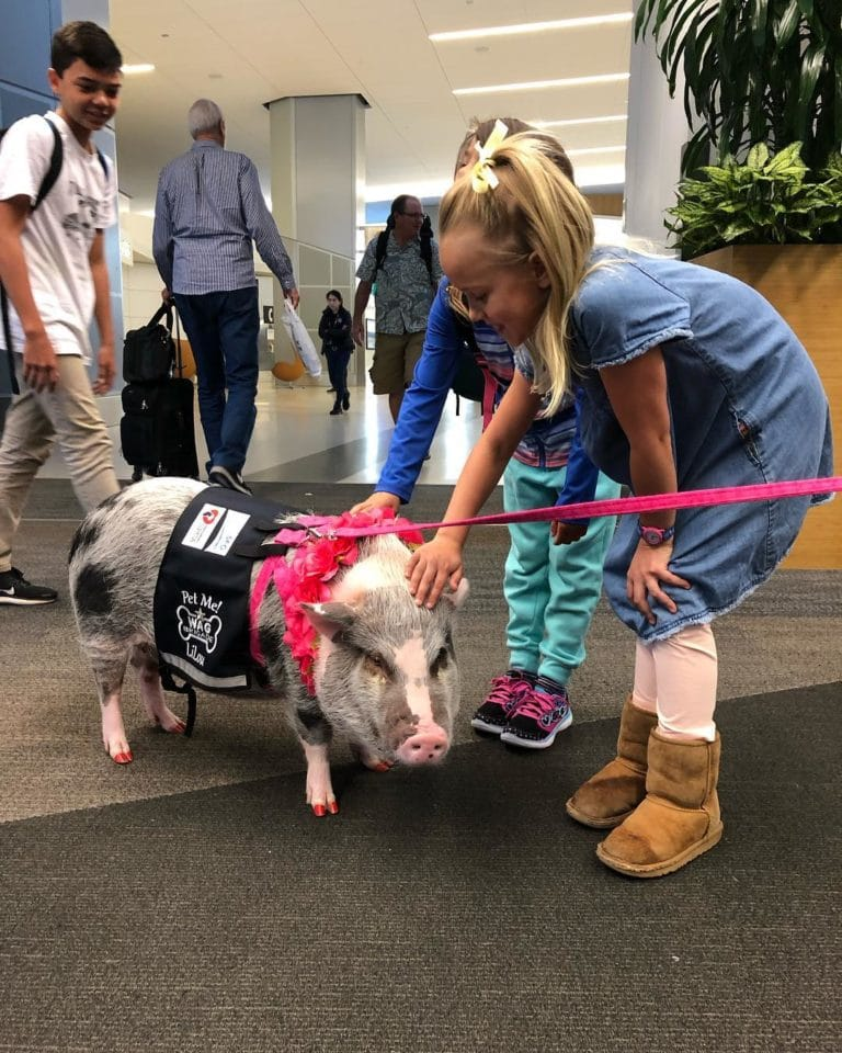 Animal Assisted Therapy Help Passengers In San Francisco Airport Manage Stress